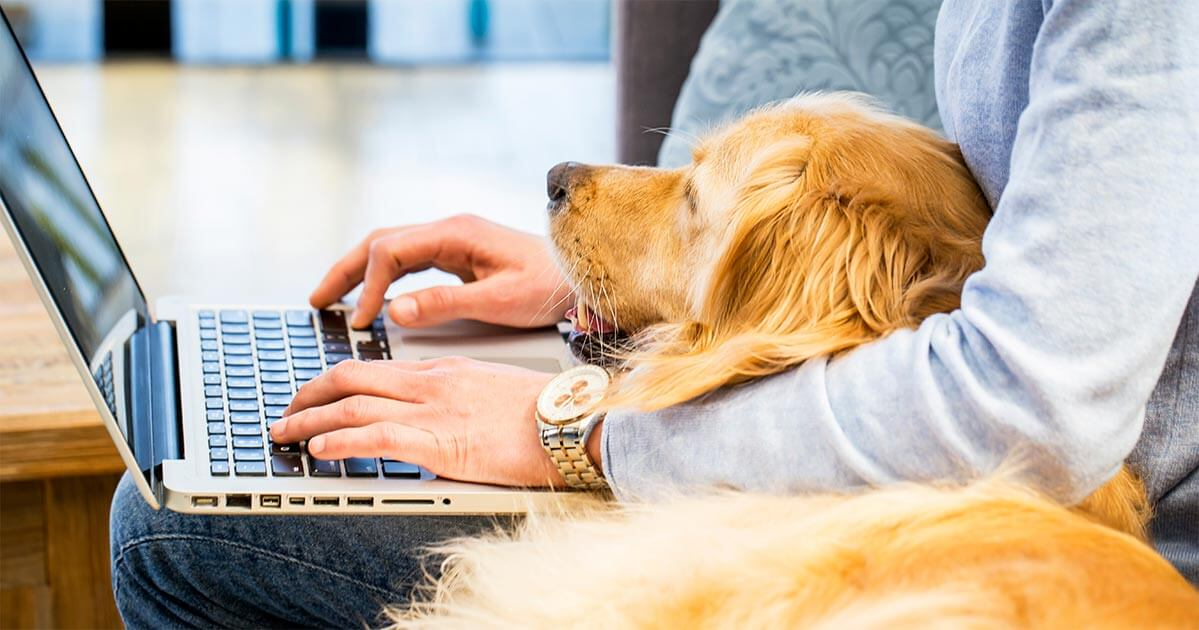 Hund liegt auf Schoß während Mann arbeitet
