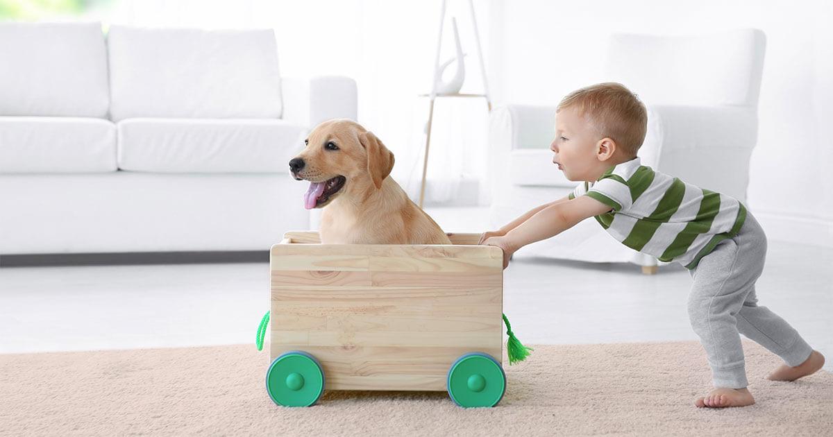 Kind schiebt Hund in Wagen durch die Wohnung