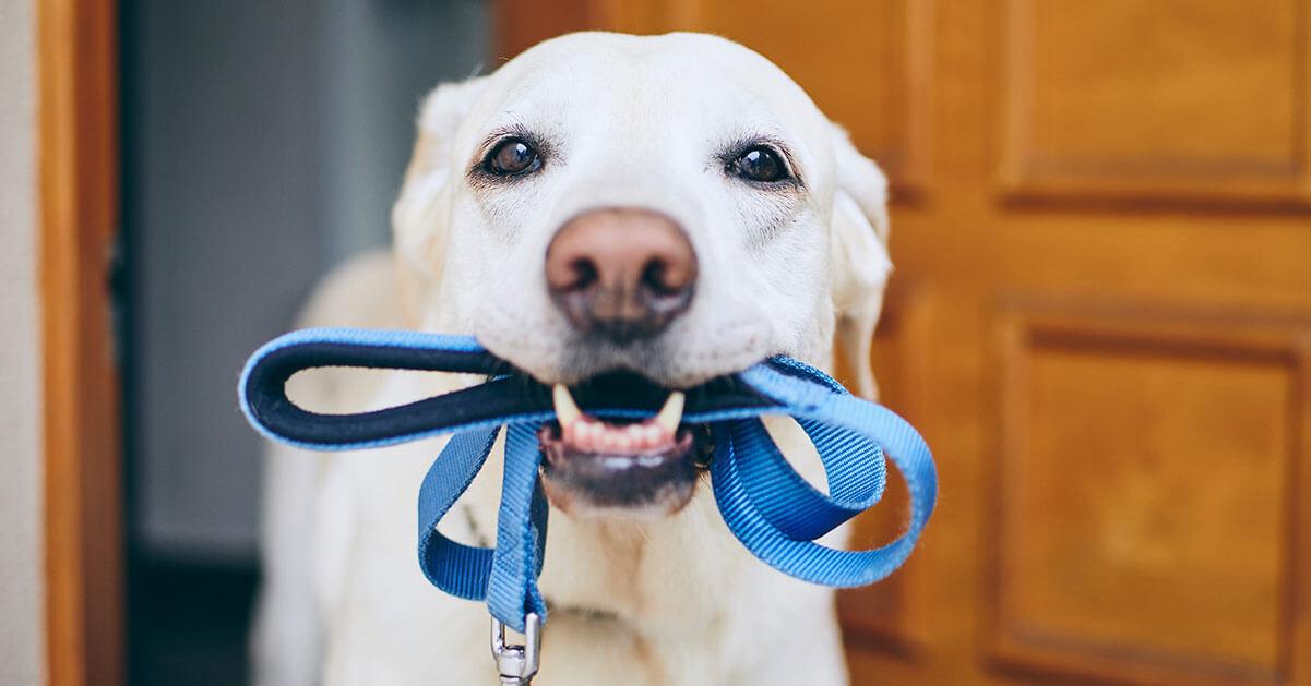 Hund mit Leine in Maul