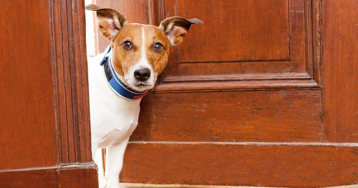 Hund steckt den Kopf durch die Tür.