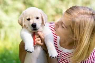 Adopter Un Chiot Top 10 Pour Une Adoption Reussie
