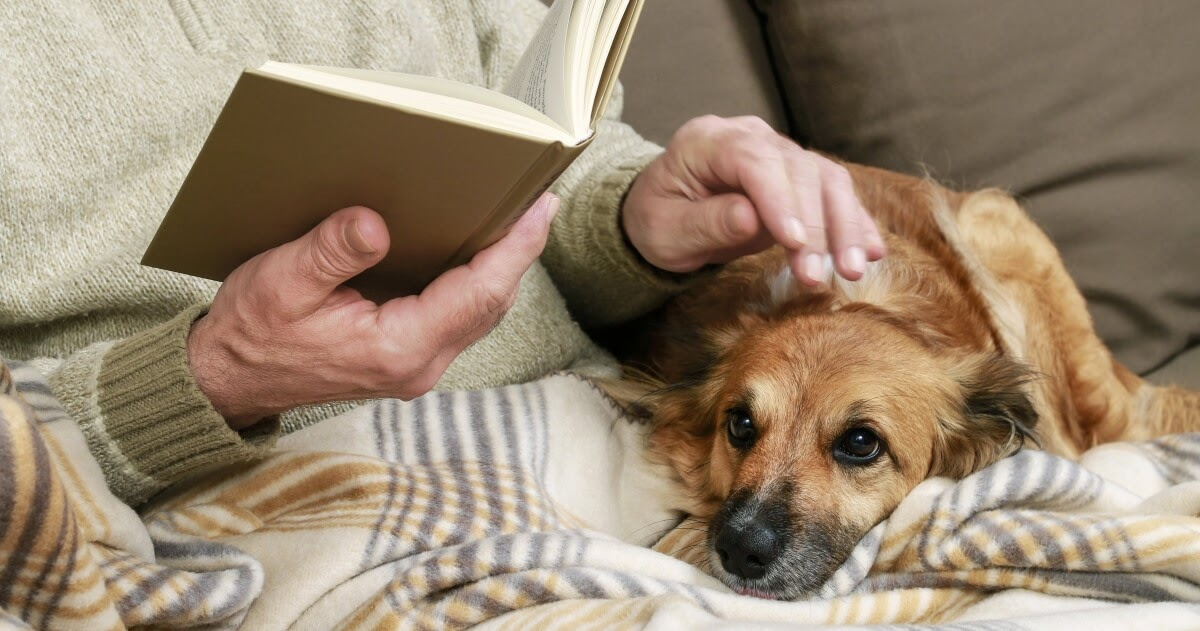 dog relaxing on owners lap on blanket