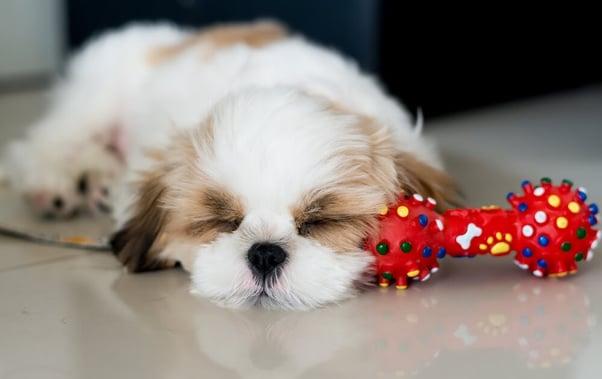 cute puppy home alone