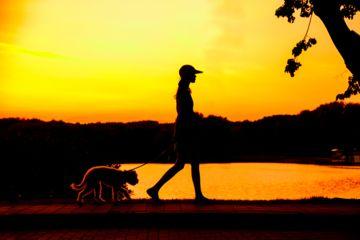 chiot et une femme vont marcher au crépuscule