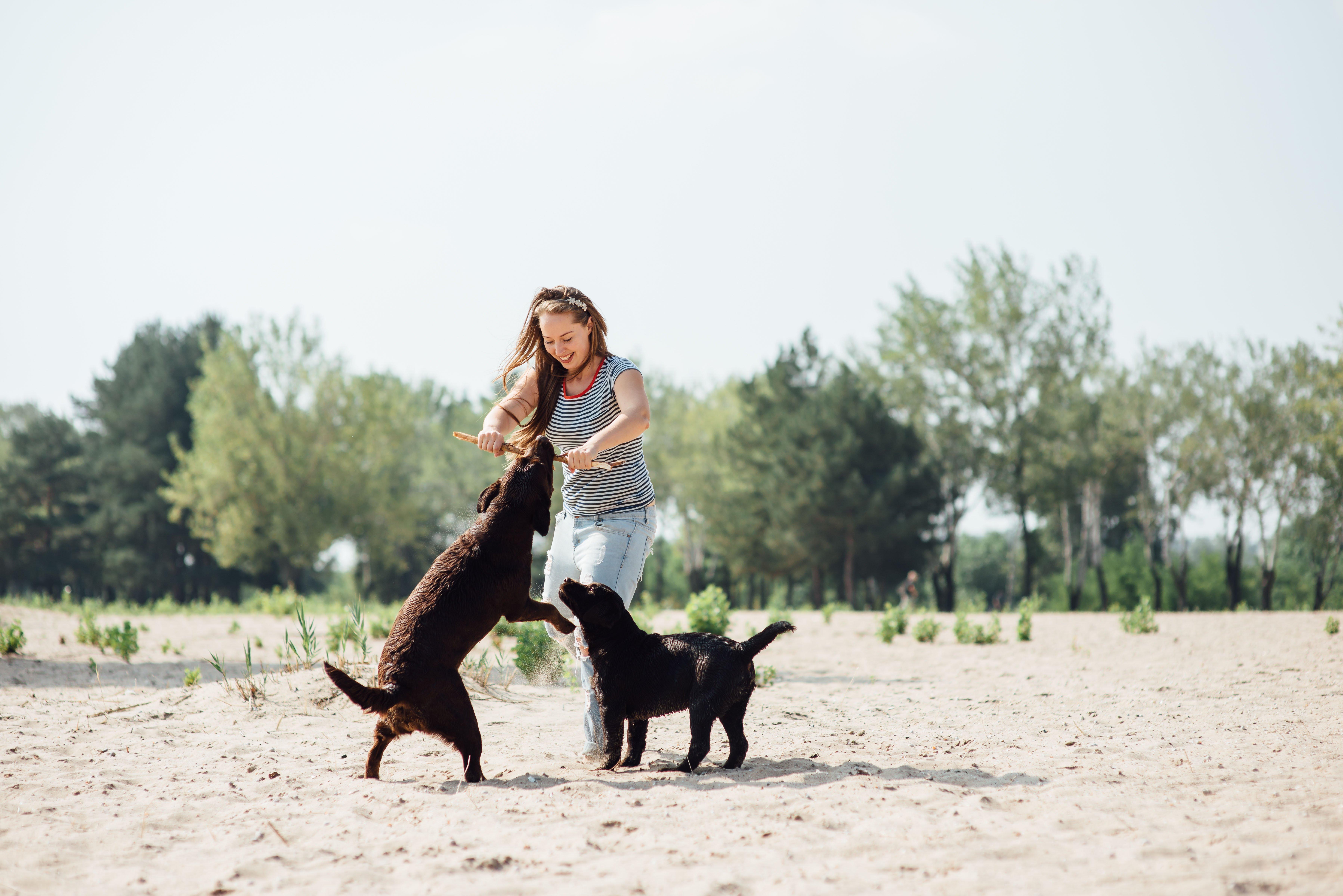 Hunde spielen mit Frau im Sand