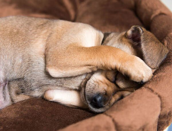 nyugodt-kutya-tuzijatek2