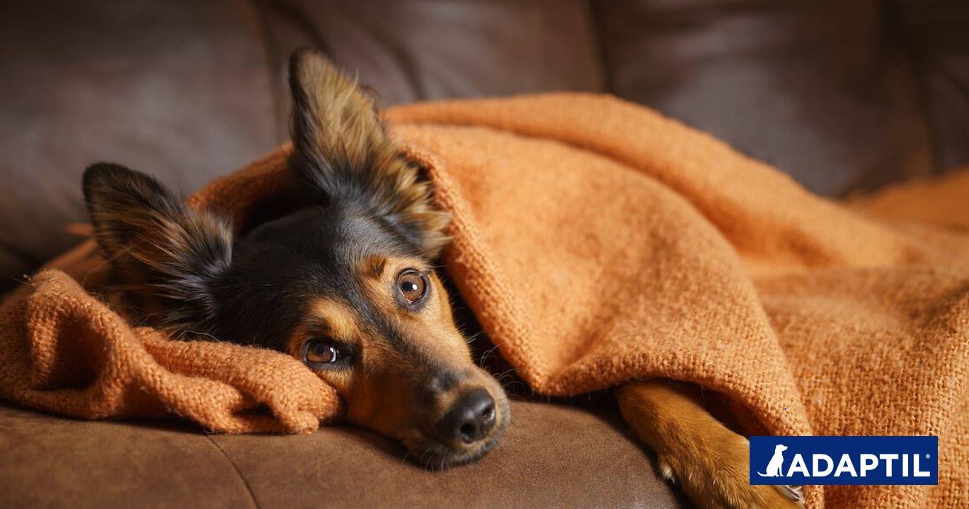 Adaptil_Tu perro está estresado