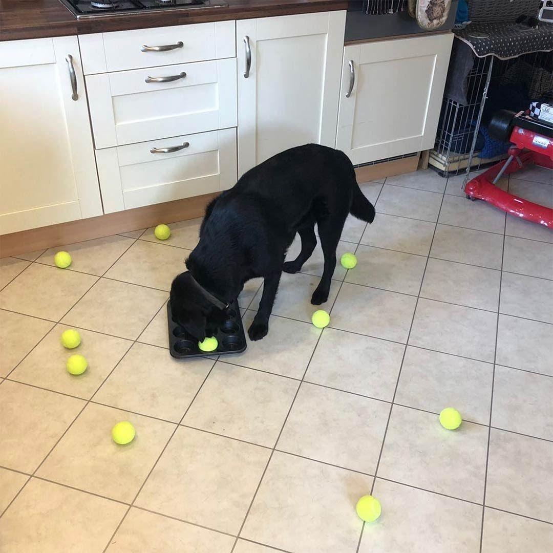Cachez les croquettes de votre chien