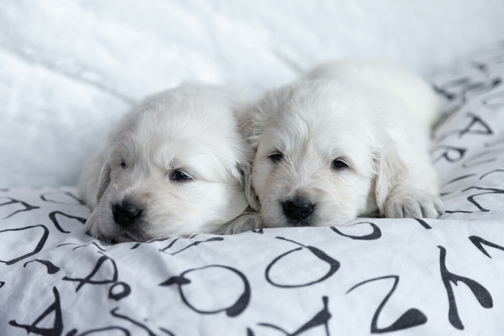 cute puppies home alone