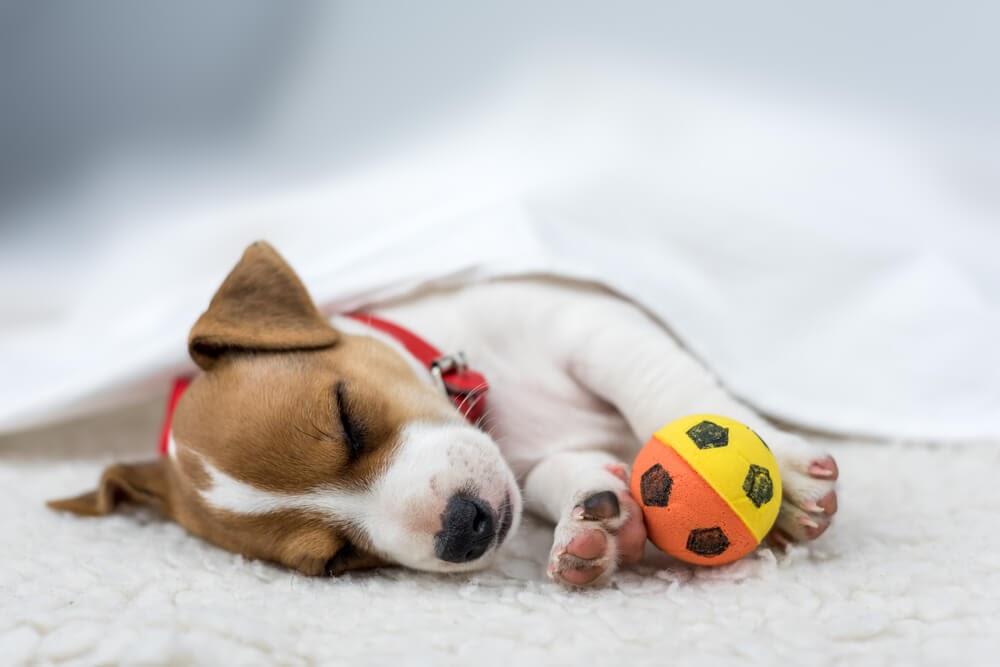dog sleeping home alone
