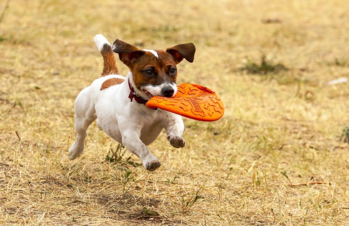 Proprio come accade per gli umani, è fondamentale che anche i cani facciano esercizio fisico per restare in ottima forma e in salute! Si tratta di un ottimo allenamento cardiovascolare che, oltre a mantenere sano il sistema immunitario, fornisce al cane lo stimolo mentale di cui ha bisogno per stare bene anche a livello emotivo.