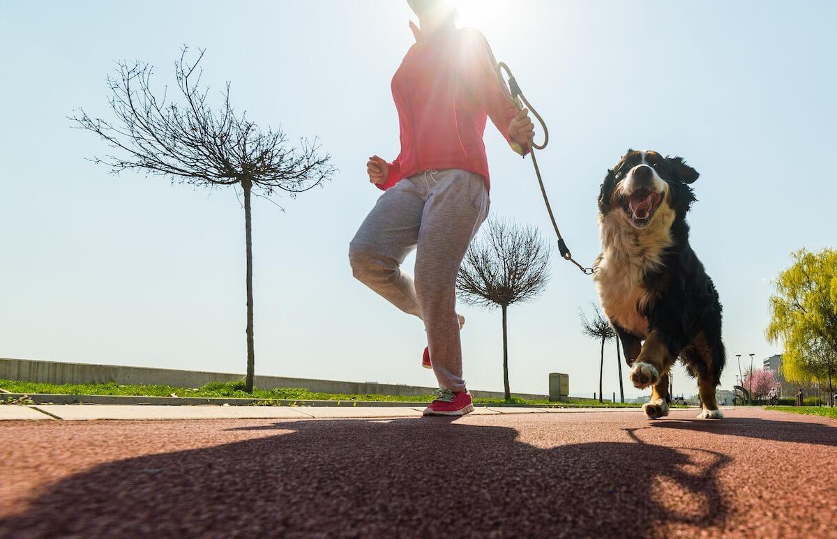 Quanta attività fisica deve fare il cane?