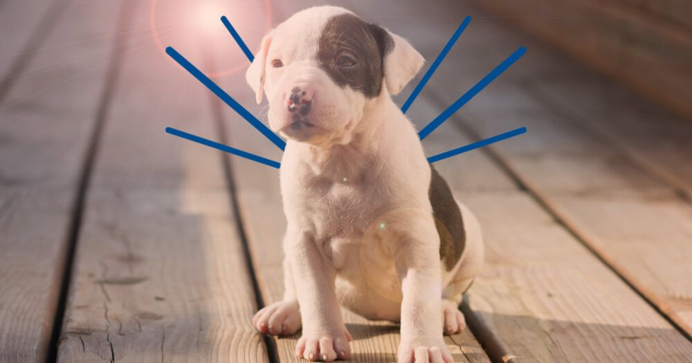 Train your puppy to sit_feature-1
